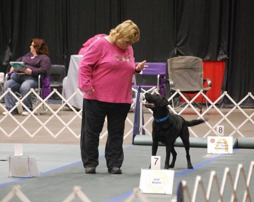 Rally Obedience Classes | Canine Sports